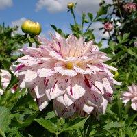 Пёстрый цветок :: Татьяна Георгиевна