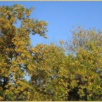 Листья желтые.... :: Вера