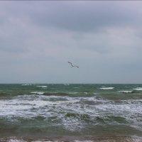 Азовское море :: Татьяна Пальчикова