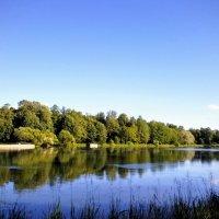 Лесное озеро. :: Жанна Викторовна