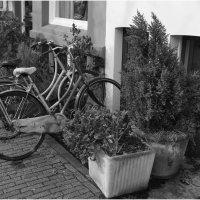 Город велосипедов :: Varvara Barkhvits