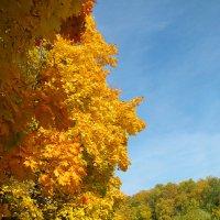 Осень в Царицыно :: Vera Ostroumova
