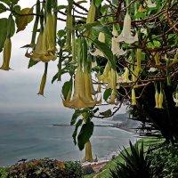 Весна в Перу :: Svetlana Galvez