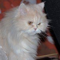 Жил- был кот. :: Венера Чуйкова