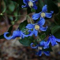 Экзотический цветок :: Liliya Kharlamova