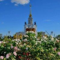 Розы на ВДНХ :: Olcen Len