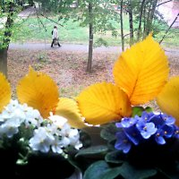 На моем окошке осень :: Елена Семигина