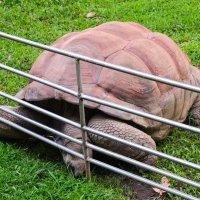 Большая черепаха :: Евгений Васильев