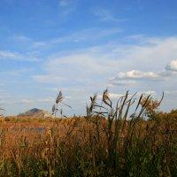 Прозрачных облаков спокойное движенье, как дымкой солнечный перенимая свет... :: Евгений Юрков