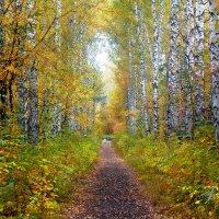 Золотая осень. :: Виктор Шпаков