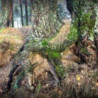 Сроднясь в земле . сплетясь ветвями,,. :: Любовь