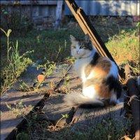 Кошка с персиком :: Владимир Стаценко