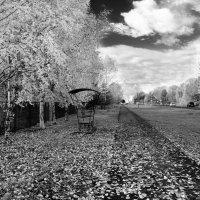Просто осень 2 :: Евгений Житников
