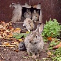 Кролячье семейство :: Светлана Рябова-Шатунова