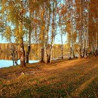 Мир так прекрасен в золоте осеннем... :: Нэля Лысенко