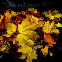 Вечерние листья :: Marina Bernackaya Бернацкая