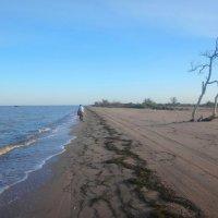 На песке :: Сергей Анатольевич