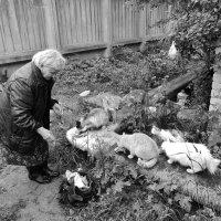 Сегодня пенсию получила, общая радость . :: Святец Вячеслав