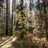 Прозрачный лес сентября :: Галина Кан