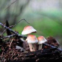 в осеннем лесу... #9 :: Андрей Вестмит