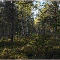 Утро в осеннем лесу. :: Роланд Дубровский