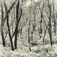 The trunks. :: Андрий Майковский