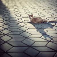 каждый кот в душе - египетский сфинкс :: Сергей Пилтник