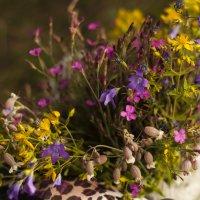 Полевые цветы :: Юлия Петлякова