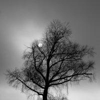 Дерево :: Денис Матвеев