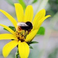 humble-bee :: Марина M