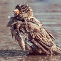 3 Лебединое, пардон - воробьиное! - озеро-) :: Андрей Поляков