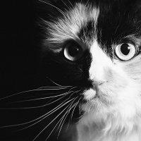 У страха глаза велики :: Наталья Наумова