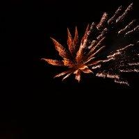 Огненный цветок :: Катерина Савина