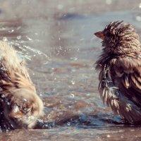 4 Лебединое, пардон - воробьиное! - озеро-) :: Андрей Поляков
