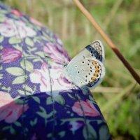 Бабочка :: Лена Бердник