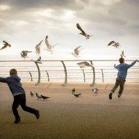 Птичьи танцы :: Mila Romans