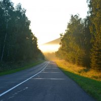 Дорога в бор :: юрий Амосов
