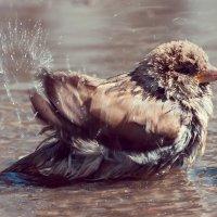 5 Лебединое, пардон - воробьиное! - озеро-) :: Андрей Поляков