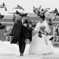 Любовь и голуби :: Алексей Гетманенко