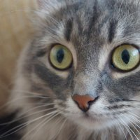 Кошка :: Катерина Голдина
