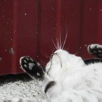 милый кот :: Галина Тырышкина