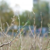 Сухая трава :: Катерина Голдина