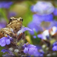 Малыш лягушонок. :: Елена Kазак