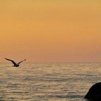 морское утро :: valeriy g_g