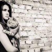 Похотливый кот :: Вадик Мацалак