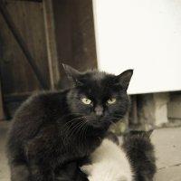 Кошка с котятами :: Света Кондрашова