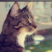 солнечный кот :: Лара Leila