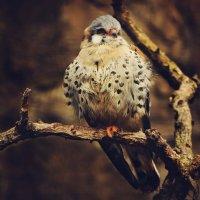 Птаха :: Наталья Наумова