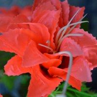 Цветы :: Аня Леонтьева