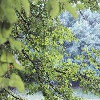 Деревья :: Mary Y